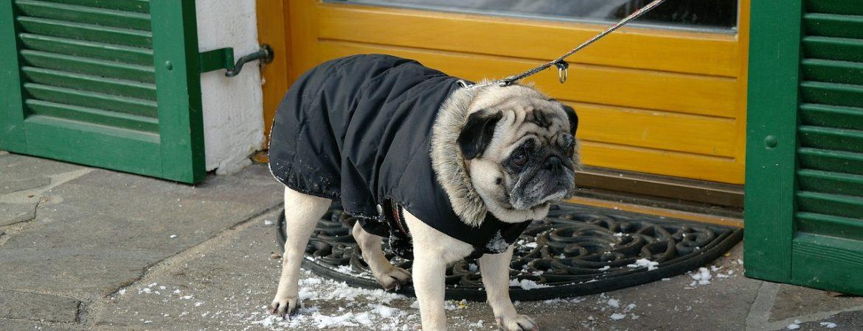 Ubrania dla psów